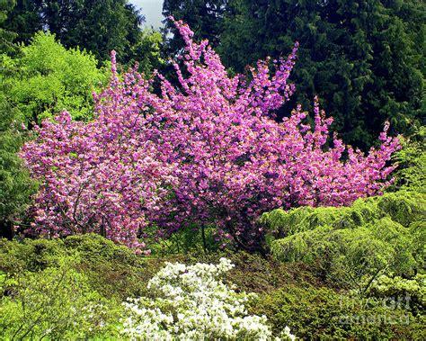 Seattle Arboretum Spring