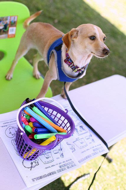 [click]secrets To Dog Training Stop Your Dog S Behavior Problems .