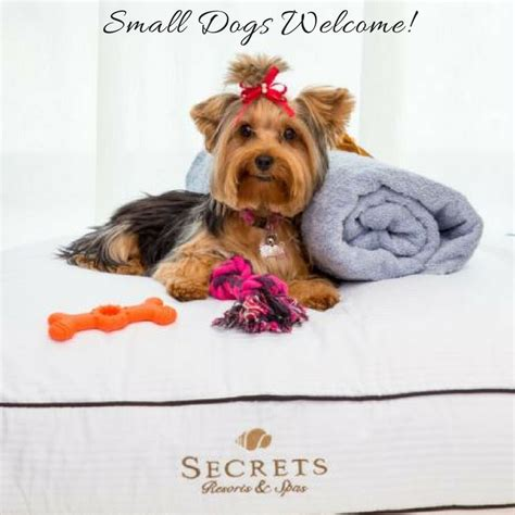 Small Dogs Welcome - Secrets Resorts.