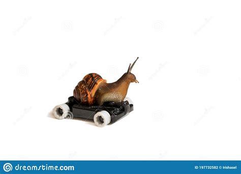 Snail Driving