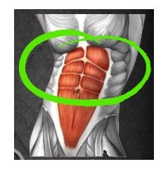 Specforce Abs For Men And Women Women Have Hot Looking Abs.