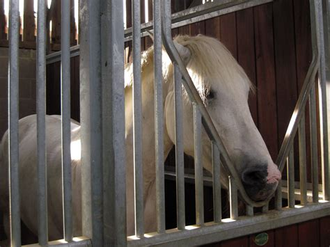 Stable Vices & Bad Habits In Horses & Ponies - Allpony.
