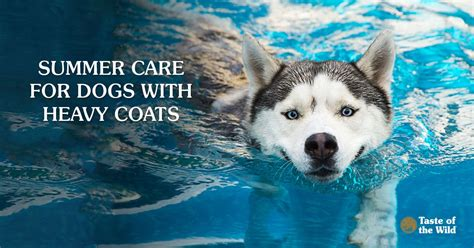 Summer Care For Dogs With Heavy Coats - Taste Of The Wild Pet Food.