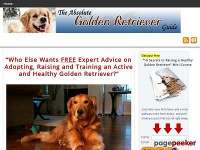 @ The Absolute Golden Retriever Guide - My-Reviews Net.