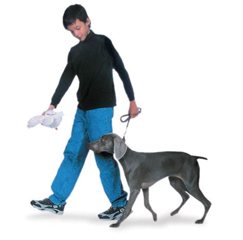 @ Teach Your Puppy These 5 Basic Commands - Akc Org.