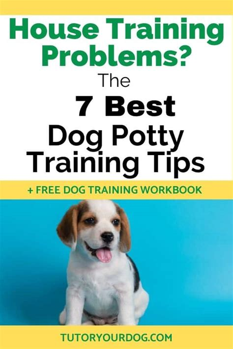 The Dog Training Tutor Review - Dog Training Advice Tips.