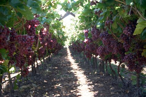 The Complete Grape Growing System - Home Facebook.