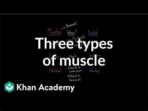 Three Types Of Muscle (video) Khan Academy.