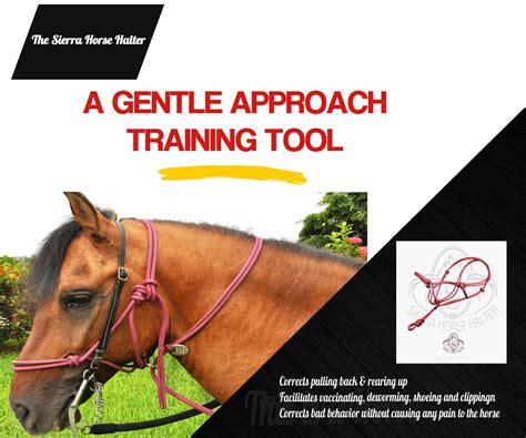 [click]train Your Horse Fast  Cure All Bad Habits .