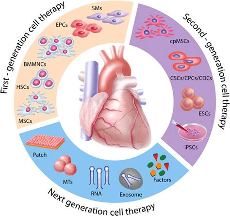Translational Cardiac Stem Cell Therapy: Advancing From First - Nature.
