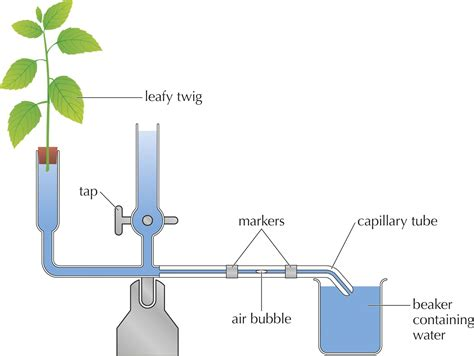 Transpiration Support And Transport Systems In Plants Siyavula.