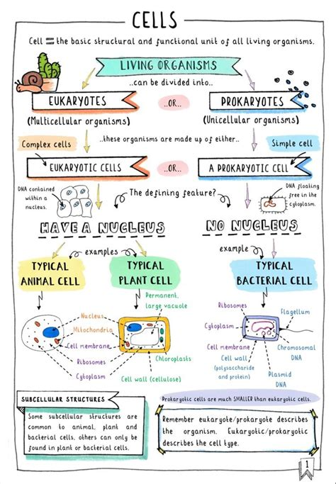 Transport In Plants - Revision 5 - Gcse Biology (single Science.