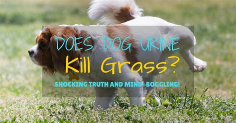 Trouble Spot Training Review - Omg!! Shocking Truth.