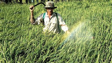 @ Vietnam To Ban Toxic Weed Killer   Talk Vietnam.