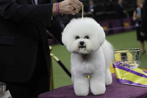 Westminster Dog Show: Curiosities, Tricks, And Secrets From.