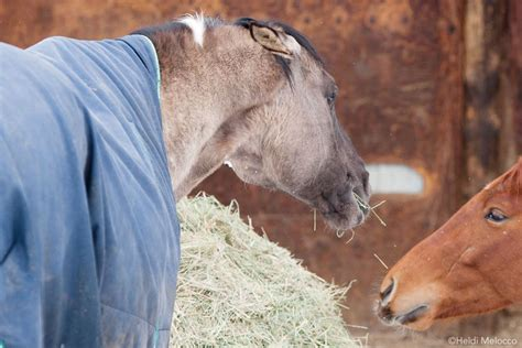 What Causes Bad Habits In Horses? - Equine Education Connection.