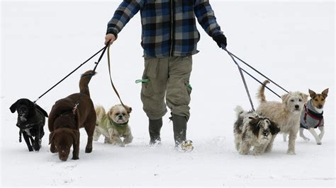 What I Learned From A Decade As A Professional Dog Walker - The.