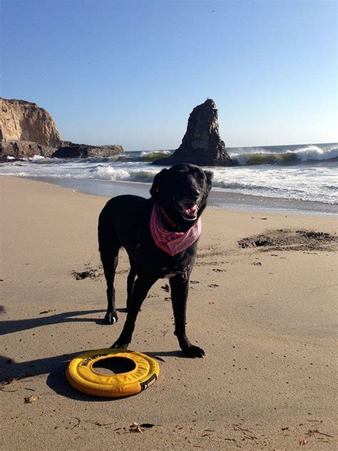 Where Can You Legally Take Your Dog In Santa Cruz? Here Are 40.