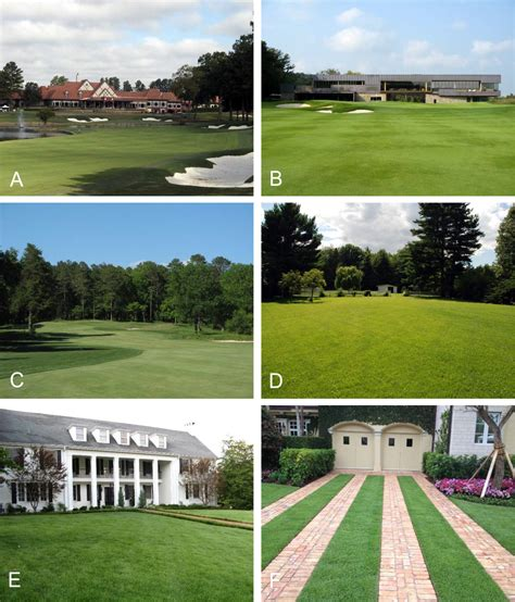 Zoysiagrass (zoysia Spp.) - The Acsess Digital Library.