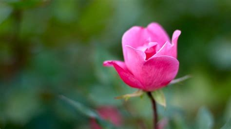 [audio] Instantly Increase Your Happiness With This Easy Zen