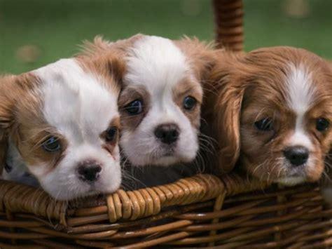 Commercial Lawyer Fremantle About Dogs Refuge Home Shenton Park