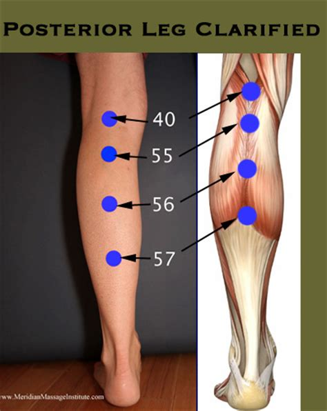 acupuncture to release tight muscles causes bones to move