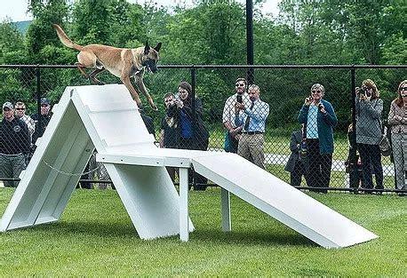 Agility Dog Training Las Vegas