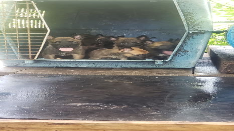 Alpha Dog Training Ga Levi