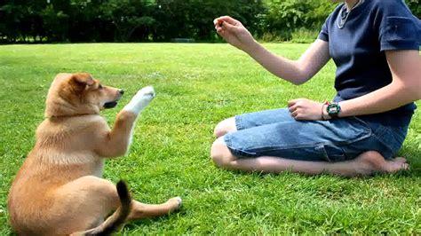 Amazing Dog Training