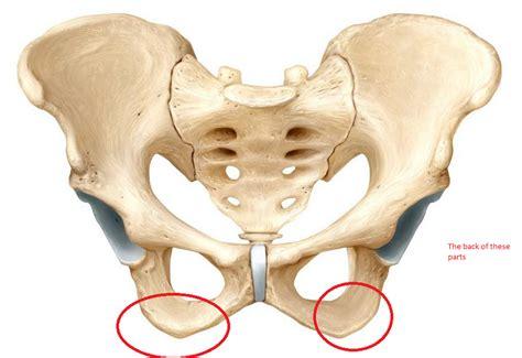 anatomy of hip flexor and ischial tuberosity syndrome w
