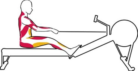 anatomy of the hip muscles pelvis pushing me away reanimation