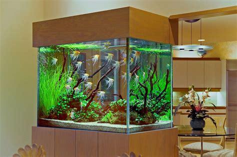 Aquarium Gestalten