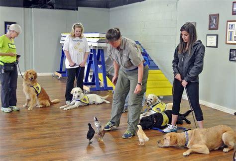 Atlanta Dog Training