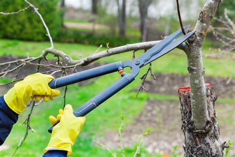 Bäume Verschneiden