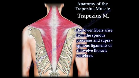 back muscles strained location khalid youtube