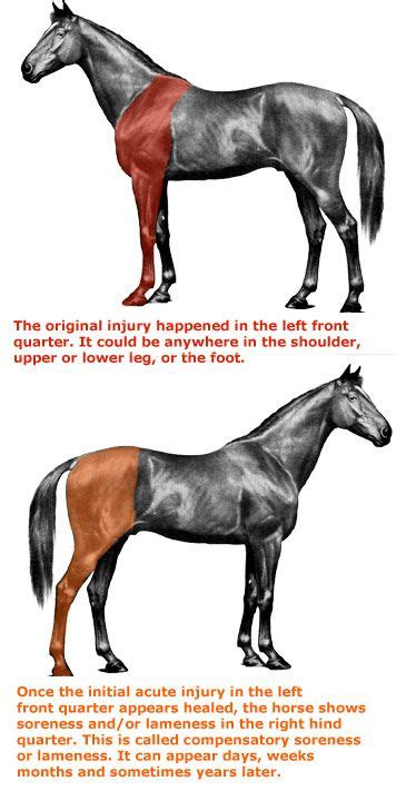back shoulder muscle injuries in horses