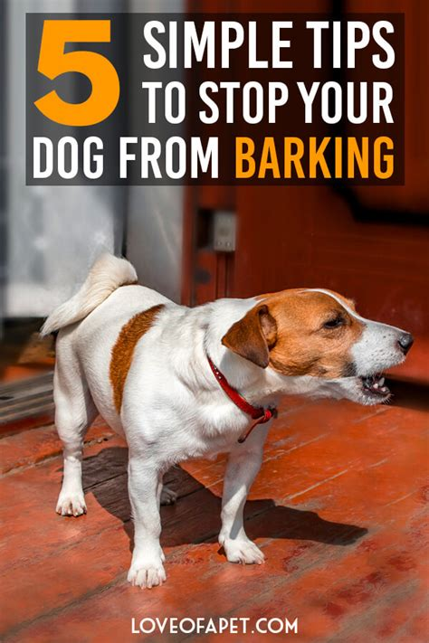 barking dogs how to stop