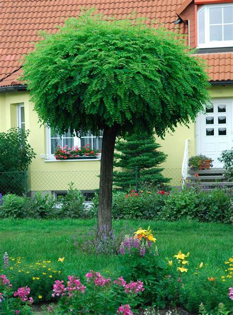 Baum Kleiner Garten