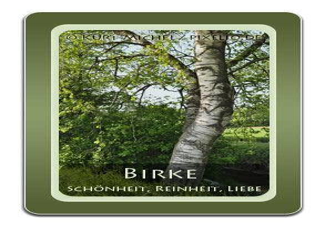 Baum Orakel