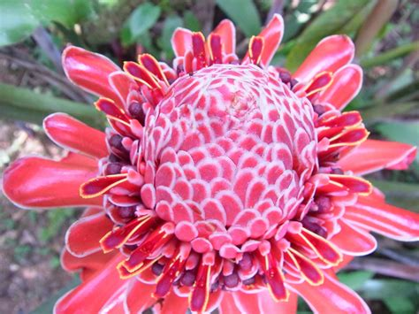 Baum Pflanzen Costa Rica