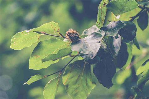 Baum Pflanzen Essen