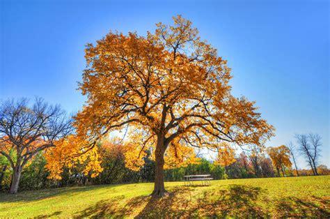 Baum Pflanzen Herbst