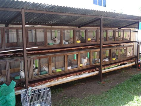 best rabbit hutch for meat rabbits