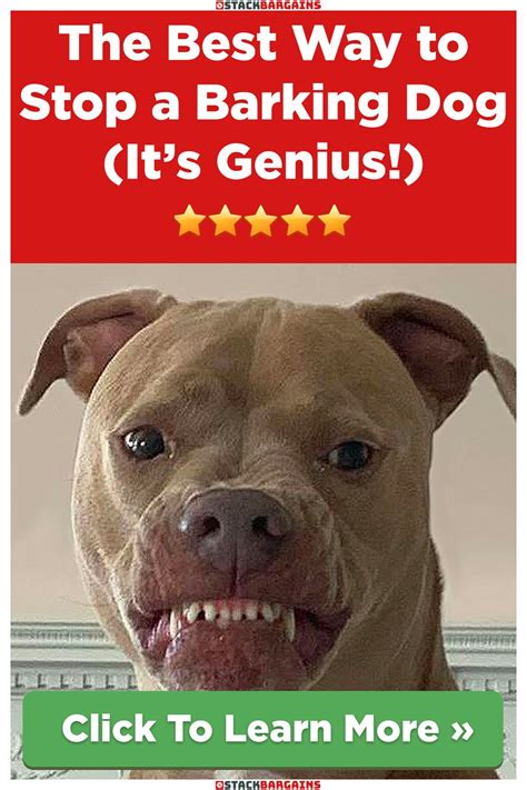 best way to stop a barking dog
