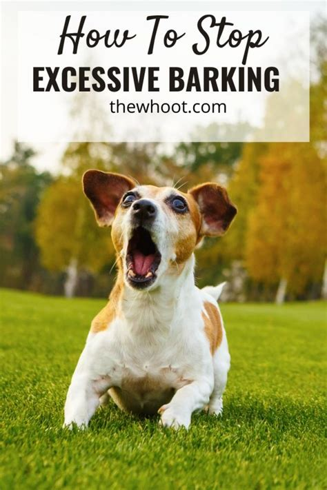 best way to stop barking dog