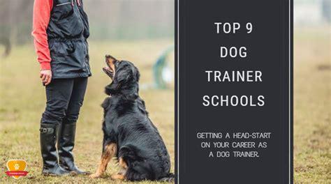 Best Schools For Dog Training