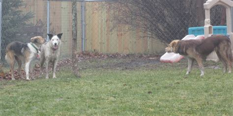 Bff Dog Training