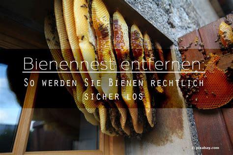 Bienennest Entfernen Kosten