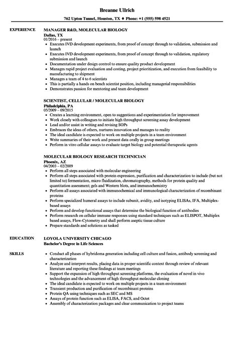student entry level resume example