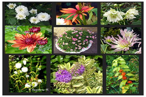 Blumen Garten Fotos